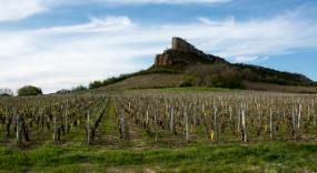 Domaine des Poncetys - Davayé